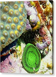 Acrylic Print featuring the photograph Emerald Artichoke Coral by Amy McDaniel