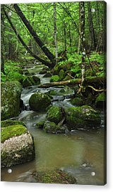 Emerald Forest Acrylic Print