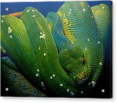 Emerald Trouble Acrylic Print