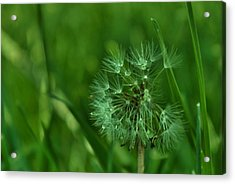 Emeralds Acrylic Print by Anna  McAlister