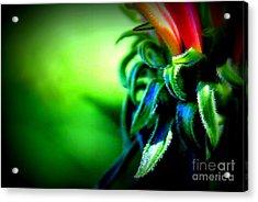 Emerging Coneflower Acrylic Print by Renee Croushore