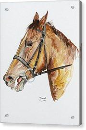 Emir The Horse Acrylic Print by Janina  Suuronen