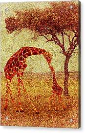 Emma's Giraffe Acrylic Print by Jack Zulli