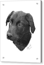 Acrylic Print featuring the drawing Emmy - 019 by Abbey Noelle