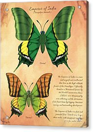 Emperor Of India Butterfly Acrylic Print by Tammy Yee