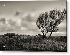 Empty Bench Naked Trees Acrylic Print by Bob Orsillo