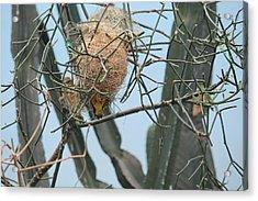 Empty Nest Syndrome Acrylic Print