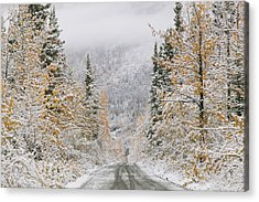 Empty Road Passing Through A Forest Acrylic Print by Panoramic Images