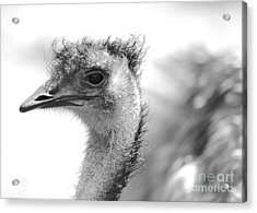 Emu - Black And White Acrylic Print by Carol Groenen