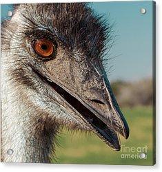 Emu Closeup  Acrylic Print by Robert Frederick