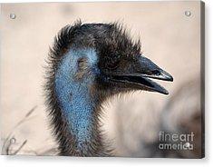 Emu Acrylic Print by DejaVu Designs
