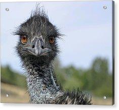 Acrylic Print featuring the photograph Emu Gaze by Belinda Greb