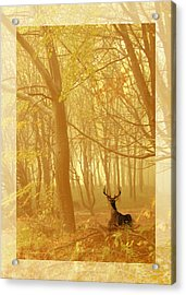 Acrylic Print featuring the photograph Enchanted Forest by Chris Armytage