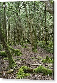 Acrylic Print featuring the photograph Enchanted Forest by Hugh Smith
