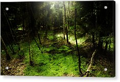 Enchanted Forest Acrylic Print by Kim Lagerhem