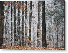 Enchanted Forest Acrylic Print by Linda Segerson