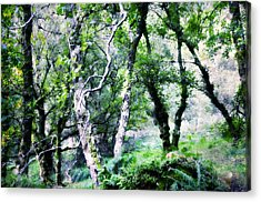 Enchanted Forest. The Kingdom Of Thetrees. Glendalough. Ireland Acrylic Print by Jenny Rainbow