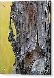 Acrylic Print featuring the painting Enchanted by Newel Hunter