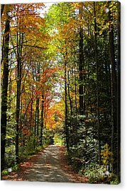 Enchanted Path Acrylic Print by Linda Marcille