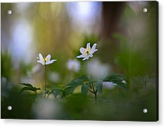 Enchanted Spring Acrylic Print