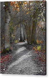 Enchanted Woods Acrylic Print by Linsey Williams
