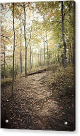 Enchanting Forest Acrylic Print