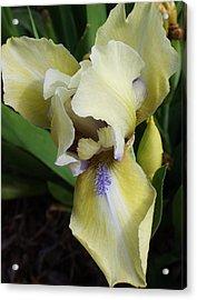 Enchanting Iris Acrylic Print by Bruce Bley