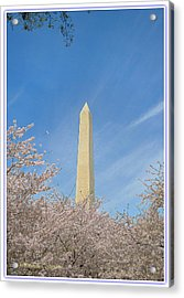 Enchanting Spring In Washington Acrylic Print by Sonali Gangane