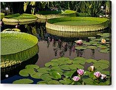 Enchanting Water Garden Acrylic Print by Byron Varvarigos