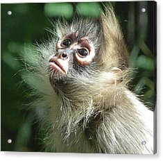 Enchanting Young Spider Monkey Acrylic Print by Margaret Saheed