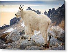 Enchantment Goat Acrylic Print by Inge Johnsson