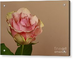 Enchantment Acrylic Print by Inspired Nature Photography Fine Art Photography