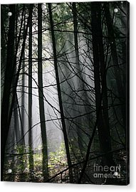 Encounters Of The Vermont Kind  Acrylic Print