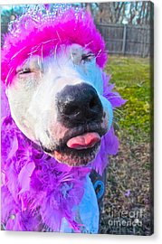 End Bsl Officer Do I Look Like I'm Into Dog Fighting? Acrylic Print by Q's House of Art ArtandFinePhotography