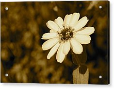 End Of Season Acrylic Print by Photographic Arts And Design Studio