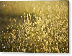 End Of Summer Acrylic Print by Allan Morrison