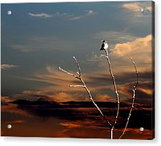 Acrylic Print featuring the photograph End Of The Day by John Freidenberg