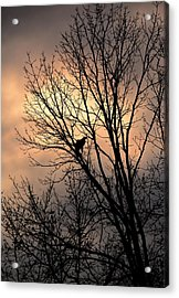 End Of The Day  Red Tailed Hawk Acrylic Print