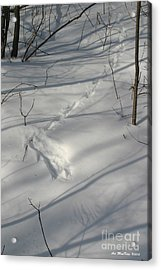 End Of The Trail Acrylic Print