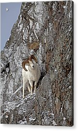 End Of The Trail Acrylic Print by Tim Grams