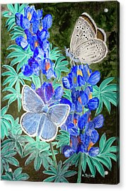 Endangered Mission Blue Butterfly Acrylic Print