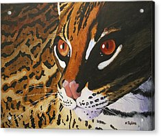 Endangered - Ocelot Acrylic Print by Mike Robles