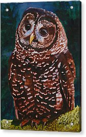 Endangered - Spotted Owl Acrylic Print by Mike Robles