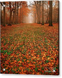 Endless Autumn Acrylic Print by Jacky Gerritsen