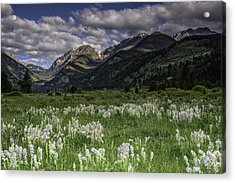Endo-valley Meadow  Acrylic Print by Tom Wilbert