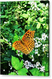 Energy Acrylic Print by Lucy D