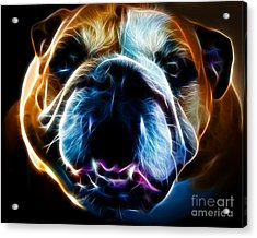 English Bulldog - Electric Acrylic Print