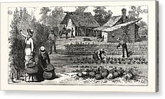 English Garden. Scenes Rugby, The English Colony Tennessee Acrylic Print by American School