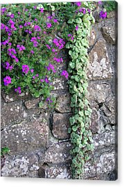 English Garden Wall Acrylic Print by Bev Conover
