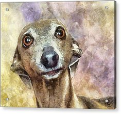 Acrylic Print featuring the painting English Hound Hunting Dog by Georgi Dimitrov
